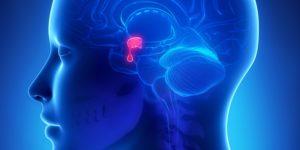 Pituitary Gland Nite