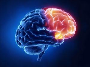 Frontal cortex Nite