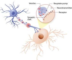 neurotransmitters NITE